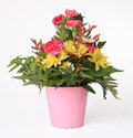 Flower arrangement a small bouquet isolated on white Royalty Free Stock Photo