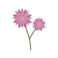 flower aster decoration image sketch