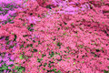 Flower background pink plant in spring time Royalty Free Stock Photos