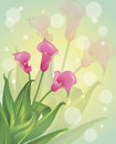 Flower background spring flowers on a pastel Royalty Free Stock Photography