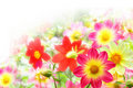 Flower background from yellow and red colors Stock Image