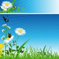 Flower banner summer background vector illustration Royalty Free Stock Photo