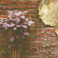 Flower basket old vintage retro style Royalty Free Stock Photography