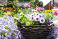 Flower basket wicker garden full of blooming flowers Stock Photography