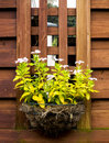 Flower basket wild on a wood fence Stock Photo