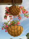 Flower baskets Stock Image