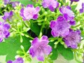 Flower beautiful purple Stock Images