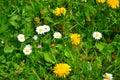 Flower, beauty color