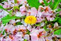 Flower, beauty and color of elow