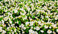 Flower-bed Royalty Free Stock Photo
