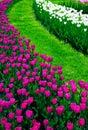 Flower-bed Lizenzfreie Stockfotografie