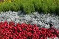 A flower bed of gray and red colors Royalty Free Stock Photo