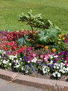 A flower bed on the lawn Royalty Free Stock Photo