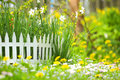 Flower Bed With Narcissuses And Decorative Fence Royalty Free Stock Photo