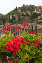 A flower bed with red flowers in city deia mallorca spain Royalty Free Stock Photo