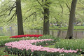 Flower bed of red and pink Tulips in park Royalty Free Stock Photography