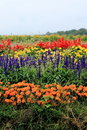 Flower bed of Takizawa Farm Royalty Free Stock Photography