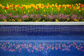 Flower bed of tulips and reflection in water beautiful flowers pool Royalty Free Stock Images