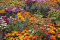 Flower bed a variety of vibrantly colored flowers in one garden Stock Images