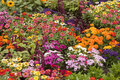 Flower bed a variety of vibrantly colored flowers in one garden Stock Image