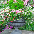 Flower bed in vase beautiful Royalty Free Stock Image