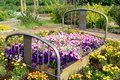Flower Bed Royalty Free Stock Photo
