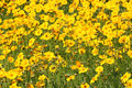 Flower bed with yellow flowers Stock Photography