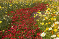 Flower beds Stock Images
