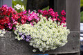 Flower Beds Of Different Varie...