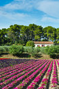 Flower beds at the farmhouse in france in the autumn Royalty Free Stock Image