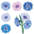 Flower bloom icon set cornflower isolated summer symbol collection Royalty Free Stock Photos
