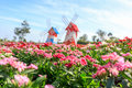 Flower Blossoming in the Garden with Wind Turbine Tower Royalty Free Stock Photo
