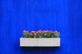 Flower on blue wall background Royalty Free Stock Photo