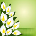 Flower border with calla lilies is presented Royalty Free Stock Photography