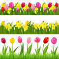 Flower Borders. Vector Stock Image