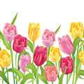 Flower bouquet seamless spring frame border tulips garland on white background isolated Stock Image