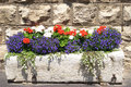 Flower box Royalty Free Stock Photo