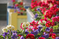 Flower box displays photo of bright summer pretty in full bloom Royalty Free Stock Photo