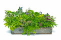 Flower box full of herbs a wooden fresh green sage thyme chervil parsley borage mint oregano and basil Royalty Free Stock Photo