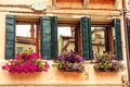 Flower boxes and windows. Venice. Royalty Free Stock Photo