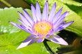 Flower bud in Rio de Janeiro Botanical Gardens Royalty Free Stock Photo