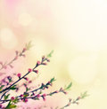Flower buds spring background floral on pink spring bokeh Stock Photography