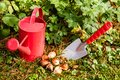 Flower bulbs in the garden tulip with shovel and watering can Royalty Free Stock Photo
