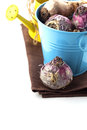 Flower bulbs, watering can, twine on white Royalty Free Stock Photo