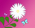 Flower and butterfly purple background with white daisies two butterflies Royalty Free Stock Images