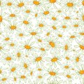 Flower camomile seamless pattern background daisies medical vector sketch illustration Stock Photos