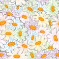 Flower camomile seamless pattern pastel background daisies medical vector sketch illustration Stock Photography