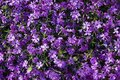 A picture of a Flower Carpet Royalty Free Stock Photo