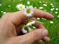 Flower chain of daisies Royalty Free Stock Photos