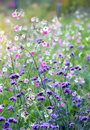 Flower close up, Shallow Dof Royalty Free Stock Photo